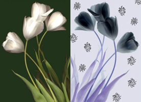 Photo Genetics - Flowers